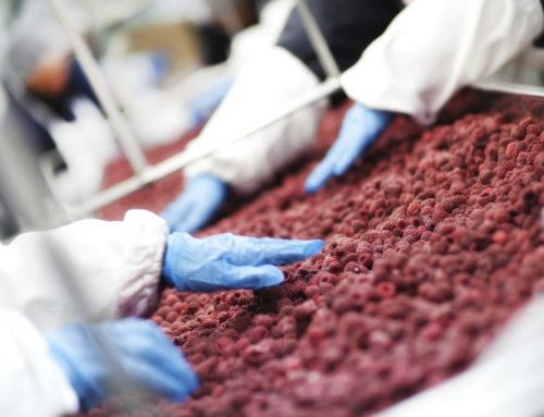 Sicurezza e produzione alimentare: la certificazione IFS